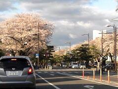 八甲田山付近