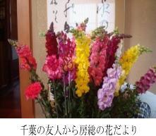 千葉の友人から房総の花だより
